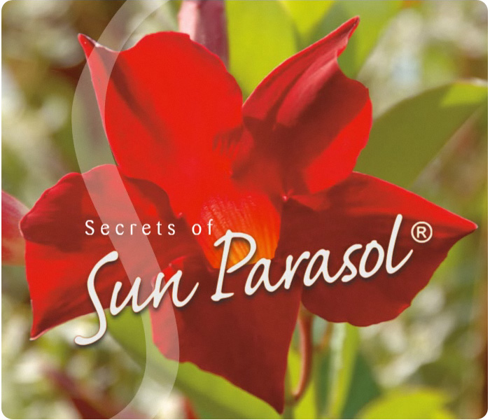 Secrets of SunParasol